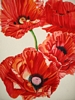 Vertical Red Poppies