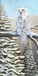 The Hunter (Snowy Owl)